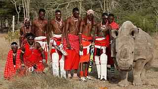 Kenya cricket charity tournament for conservation [no comment]