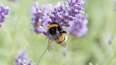 Algérie : la transhumance pour sécuriser les abeilles