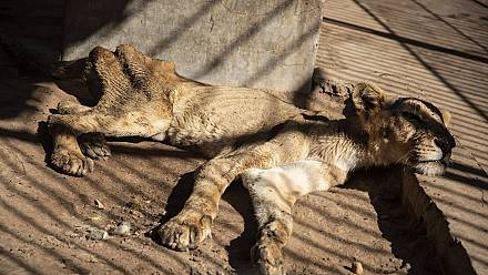 Hope for Khartoum lions as experts arrive to help