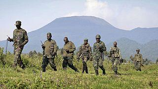 RDC : accusé de déforestation d'un célèbre parc, un chef rebelle pygmée arrêté