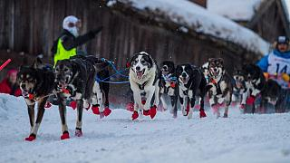 Le Norvégien Robert Sorlie remporte la 13e édition de la course de traîneau à chiens [No Commeny]
