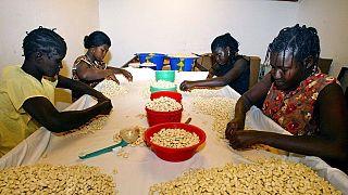 Cajou : la Côte d'Ivoire, leader mondial dénonce une contrebande vers les pays voisins