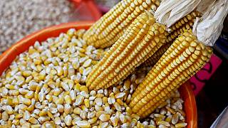 Zimbabwe corn imports reaches 11-year high