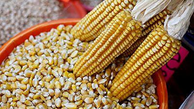 Zimbabwe corn imports reaches 11-year high