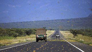 Panic as locusts reach Uganda, Tanzania
