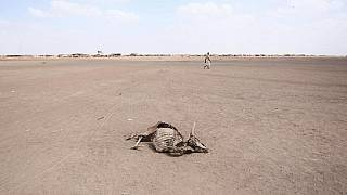 Over 1,000 animals die in drought-stricken Southern Africa