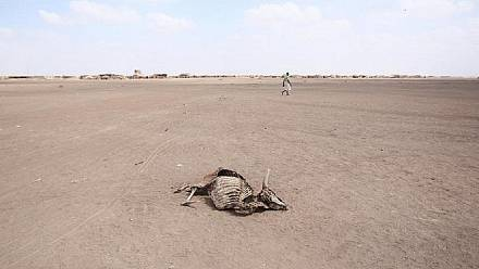 Over 1,000 animals die in drought-stricken Southern Africa