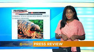 Le pangolin, espèce menacée et soupçonnée de porter le coronavirus [Revue de Presse]