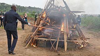 Côte d'Ivoire : 3 tonnes d'écailles de pangolin brûlées