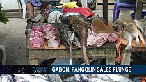 Covid-19 : la vente du pangolin en recul au Gabon [Business Africa]