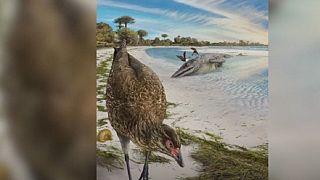 Wonderchicken, l'ancêtre des oiseaux