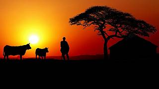 Coronavirus: en Afrique, sept pays officiellement épargnés