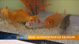 Bénin : de plus en plus de passionnés des aquariums[Grand Angle]