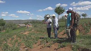Madagascar – Agriculture : les analyses de l'espoir