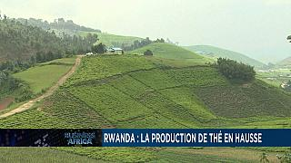 Rwanda : la production de thé en hausse, malgré le confinement [Business Africa]