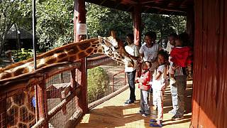 Tourist distancing: Virus impacts Kenya's Giraffe Manor