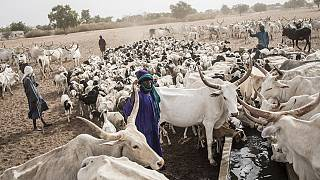 Restrictive measures leave Northern Senegalese herders stranded