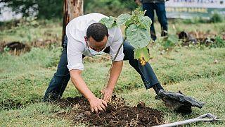 Environnement : le Premier ministre éthiopien tient à son héritage « vert »