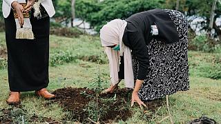 Green Legacy: Ethiopia's 5 billion tree seedlings project kicks off