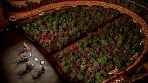 Barcelona's opera house opens to a full house of plants