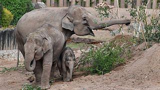 Botswana : mort mystérieuse de centaines d'éléphants
