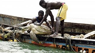 Senegalese fishermen protect sea turtles