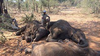 Botswana : un militaire tué par des éléphants (armée)