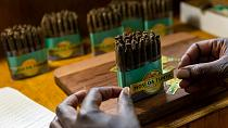 Zimbabwe's first cigar manufacturing company begins production