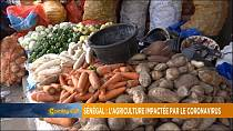 Senegal: COVID-19 slams Agric sector [Grand Angle]