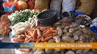 Senegal: COVID-19 slams Agric sector [Grand Angle]