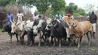 Deadly cattle raids resurge in Uganda's Karamoja region