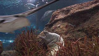 Okyanusların Bekçileri