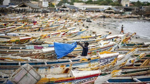 Maladie des pêcheurs : les analyses se poursuivent