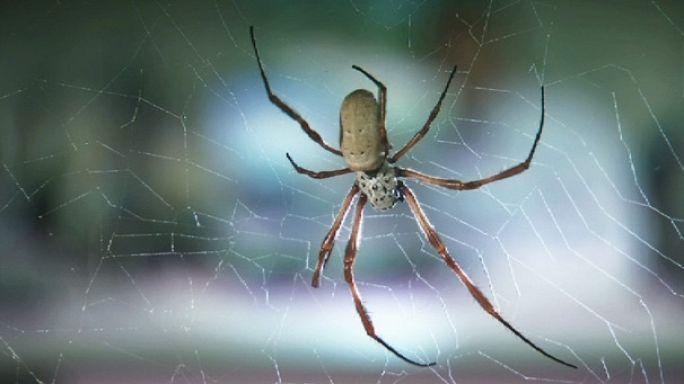Derde deva örümcekler