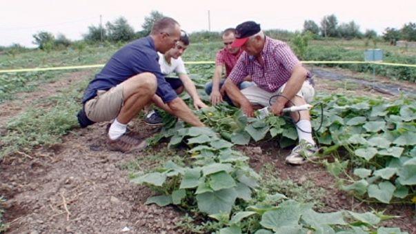 Плоды мира Кавказа