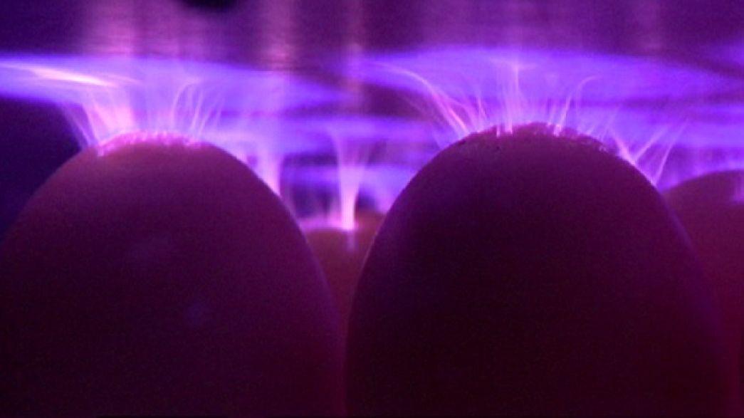Investigadores europeus testam nova forma de esterilizar ovos