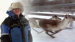 Les rennes menacés dans le cercle polaire arctique