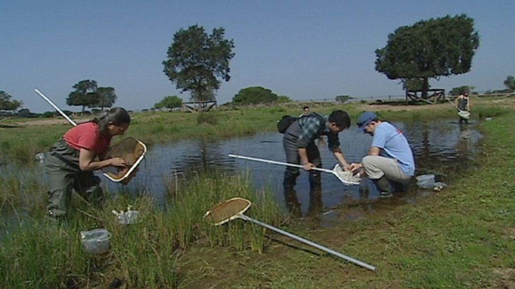 Doñana, una parque nacional amenazado por el cambio climático