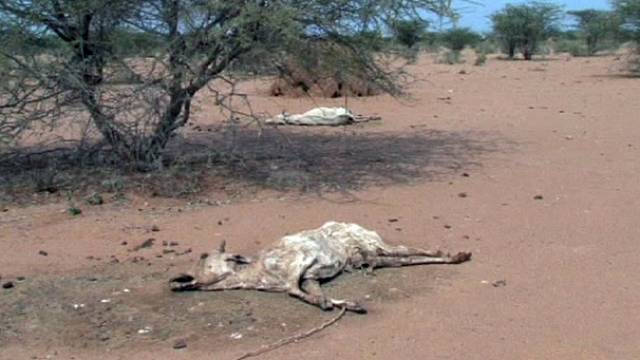Городам угрожает жажда