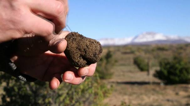 S.Africa's mountain farmers cash in on truffle bet
