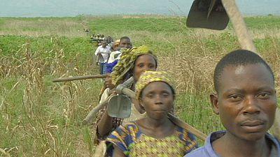 Congo: Colheitas por entre ruínas de guerra