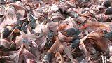 Пищевые отходы утоляют энергетический голод