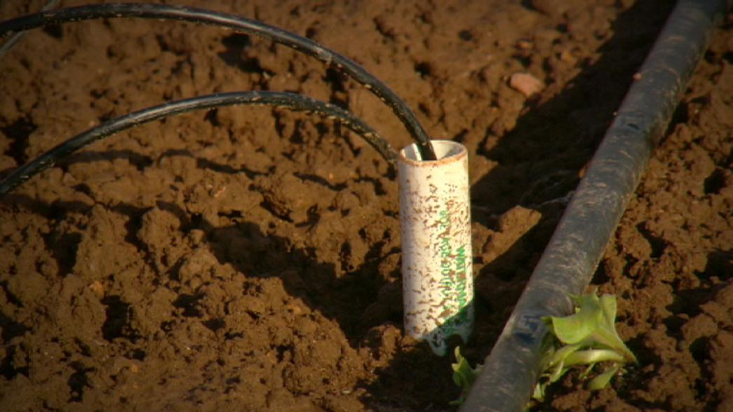 Smart irrigation bears fruit