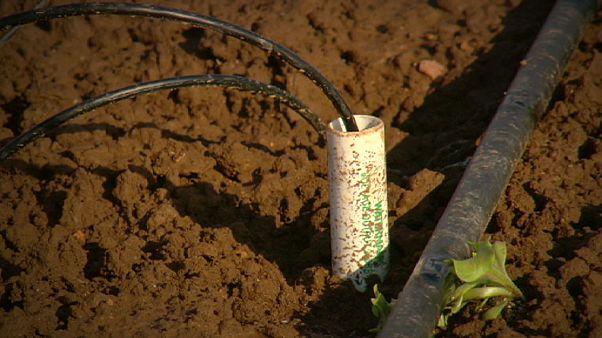 Bessere Ernten durch intelligente Bewässerung