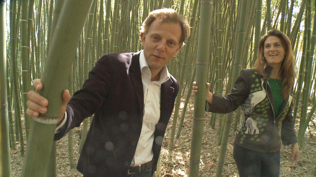 Ökologie und Innovation praktisch: Abwasserreinigung mit Bambus