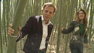 Бамбук поможет одолеть микробы и безработицу