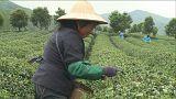 L'agriculture, un enjeu majeur