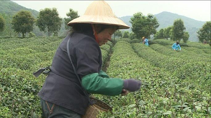 A agricultura como trabalho de futuro