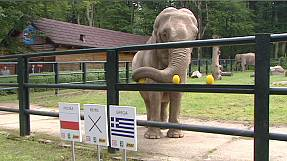 Polish zoo asks 'psychic elephant' to pick Euro winners – nocomment