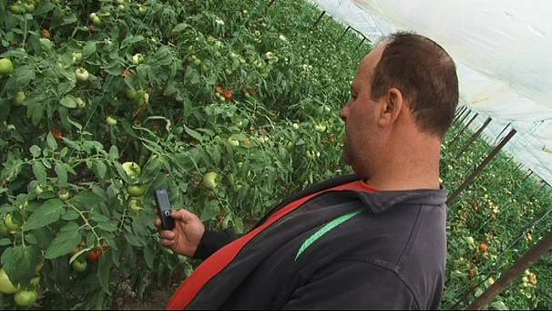 How SMS trading is helping Macedonian farmers